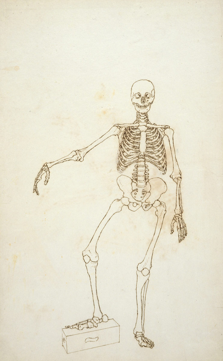 Study Of The Human Figure Anterior View From A Comparative