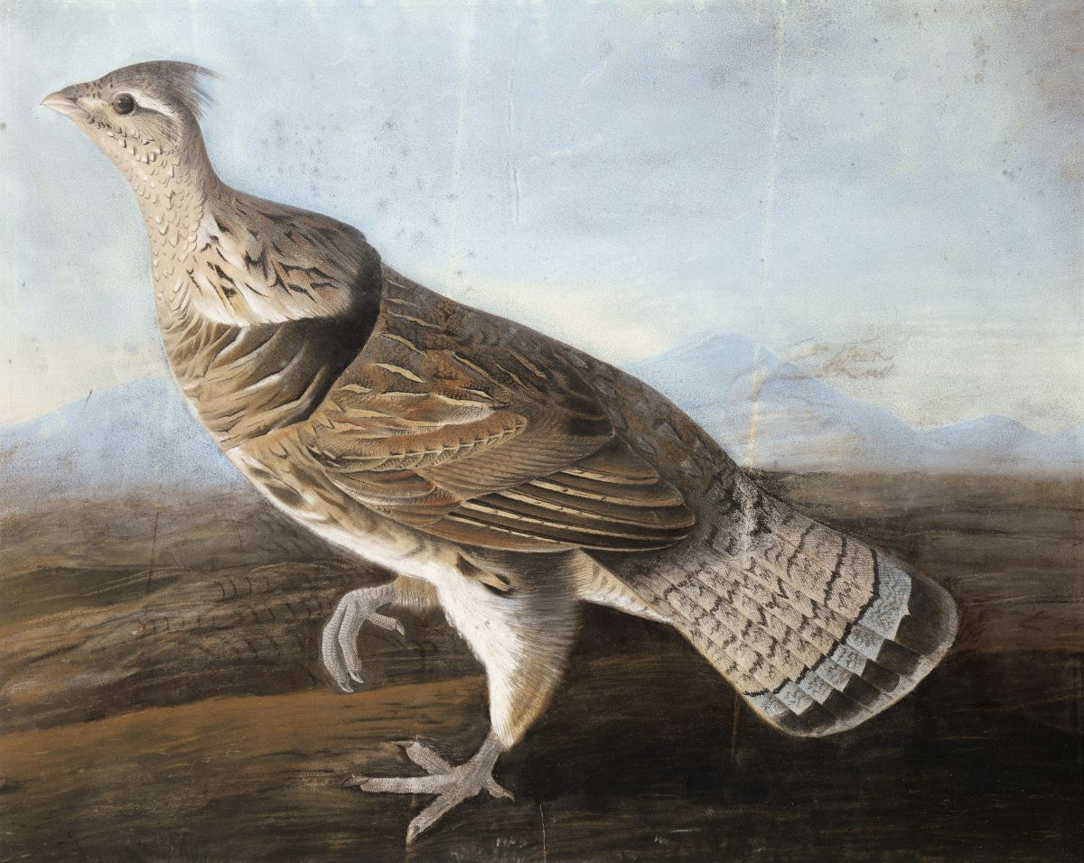 Audubon, John James